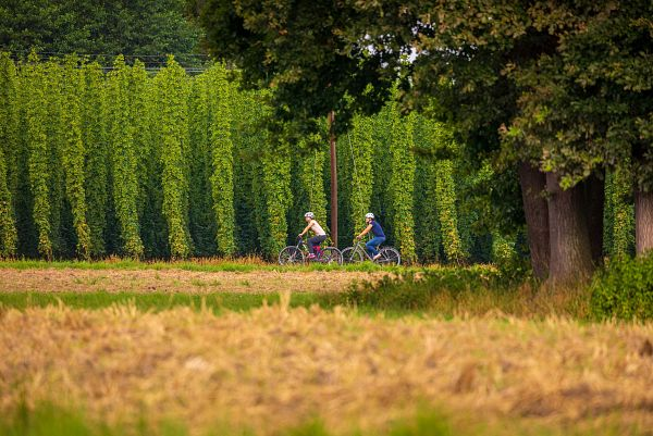 Zum Ursprung des Bieres